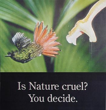 Is Nature Cruel?