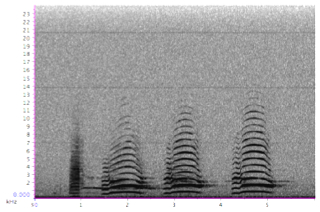 "Sound spectrogram of peacock ""ka"" call"
