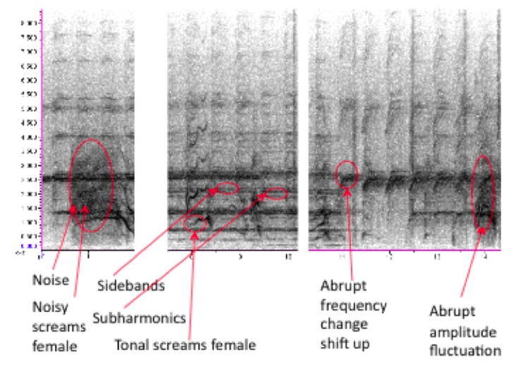 "Sound spectrogram from the movie ""Psycho"""