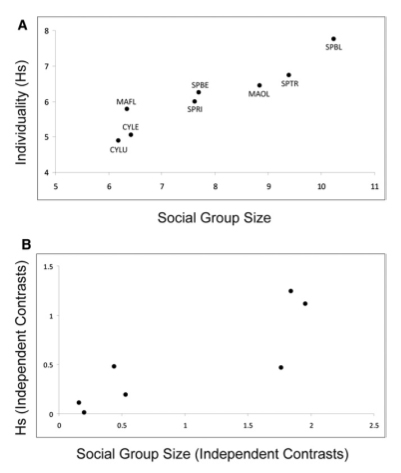 Relationship between group size and vocal individuality in marmots